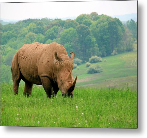 Rhino Metal Print featuring the photograph Rhino On The Hilltop by George Jones