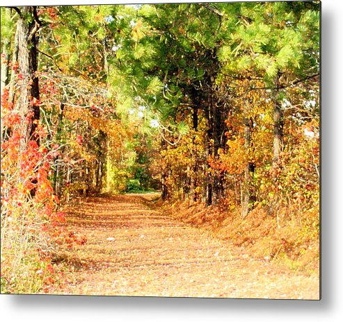 Serene Metal Print featuring the photograph Serene Path by Tracy Daniels
