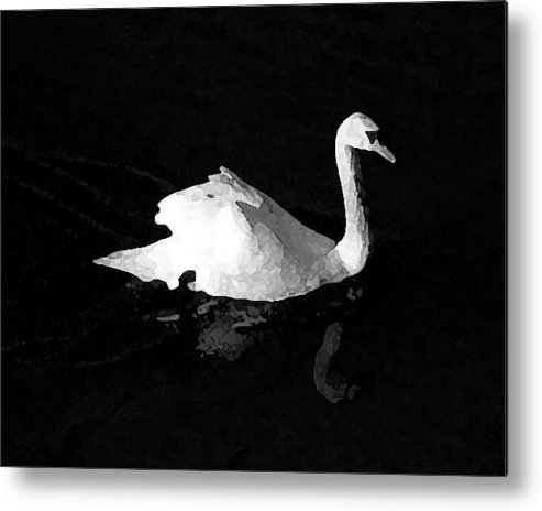 Swan Metal Print featuring the photograph Swan In Blackwater by John Bradburn