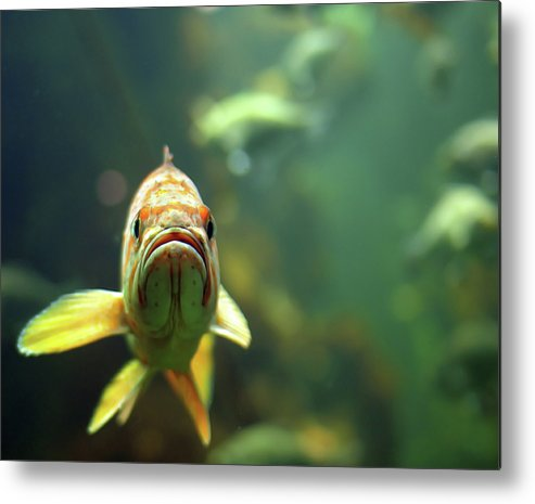 Horizontal Metal Print featuring the photograph Why The Sad Face by by Jun Aviles