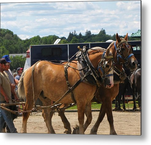 Horses Metal Print featuring the photograph Horse Pull I by Melissa Parks