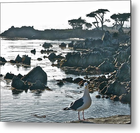 Birds Metal Print featuring the photograph Sea Gull by Cindy Lathrop