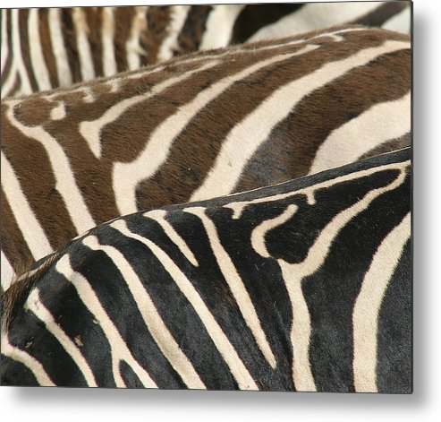 Zebra Metal Print featuring the photograph Stripes by Donald Tusa