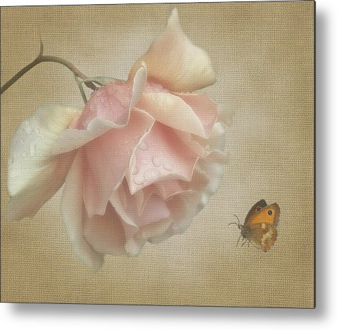 Rose Metal Print featuring the digital art Pale Rose by Marrissia Ruth