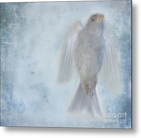 Bird Metal Print featuring the photograph Birdness by Jim Wright