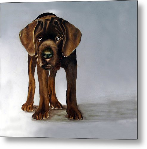 Metal Print featuring the painting Chocolate Labrador Puppy by Dick Larsen