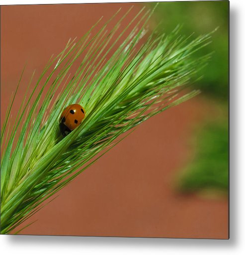 Ladybug Metal Print featuring the photograph A Walk In The Tall Grass by Dennis Reagan