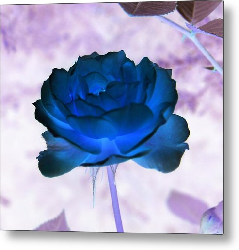 Abstract Metal Print featuring the photograph Rose In Full Bluem by Erika Lesnjak-Wenzel