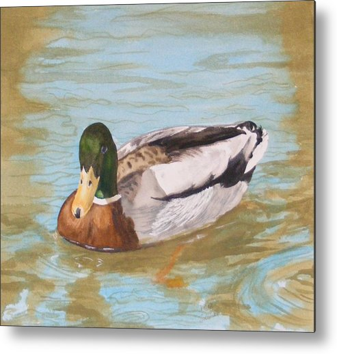 Duck Mallard Water Metal Print featuring the painting Mallard Drake by Diane Ziemski