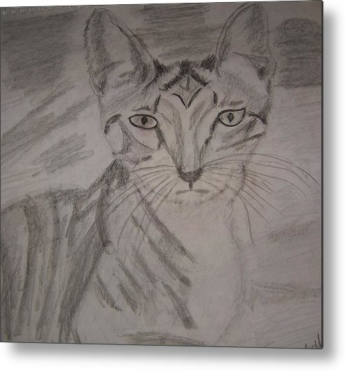Cats Metal Print featuring the drawing Big Ears Kitten by Ann Whitfield