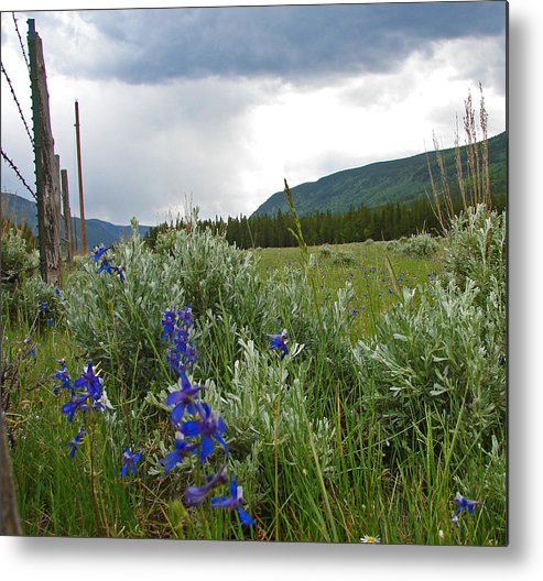 Wild Flowers Metal Print featuring the photograph Wild Delphinium by Heather Coen
