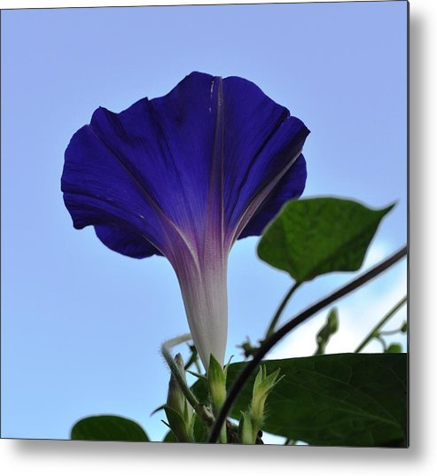 Morning Glory Metal Print featuring the photograph Morning Glory Sky by Ruben Barbosa