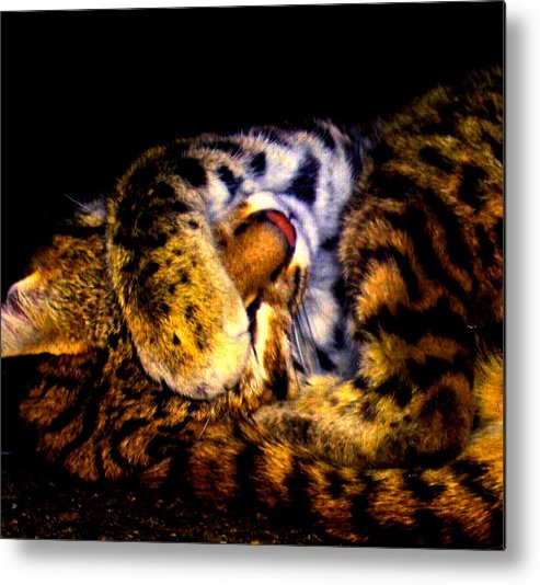 Cat Metal Print featuring the photograph Zoo Baby by Misty VanPool