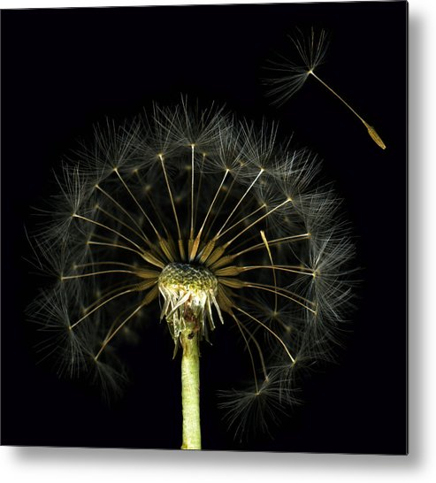 Scanography Metal Print featuring the photograph Homage by Deborah J Humphries