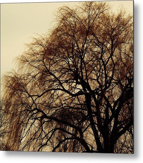 Beautiful Winter Willow Tree  Yellow Metal Print featuring the photograph Burlington Willow by Todd Sherlock