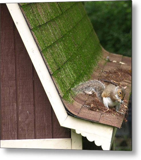 Green Metal Print featuring the photograph Barn Squirrel by Kim