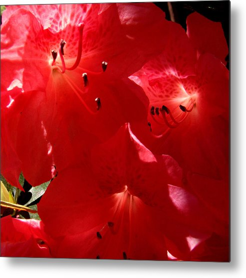 Glow Metal Print featuring the photograph Sunlight Glow by Nicole I Hamilton