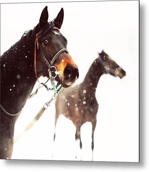 Horse Metal Print featuring the photograph Everyone Has A Dream by Jenny Rainbow