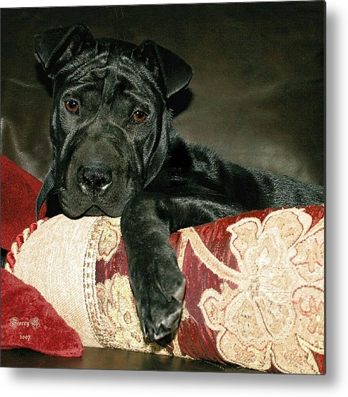 Dog Metal Print featuring the photograph Ms. Raisin by Terry Burgess