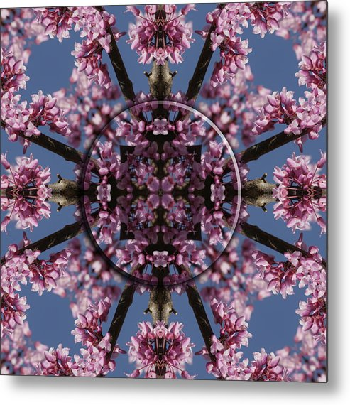 Mandala Metal Print featuring the photograph Eastern Red Bud Mandala by Alan Skonieczny