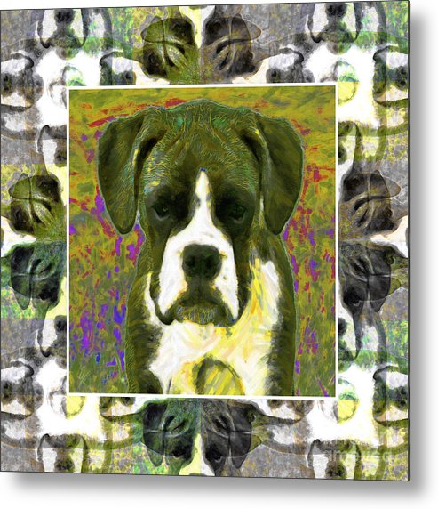 Animal Metal Print featuring the photograph Boxer Dog 20130126 by Wingsdomain Art and Photography