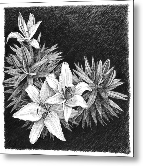 Lilies Metal Print featuring the drawing Lilies In Pen And Ink by Janet King