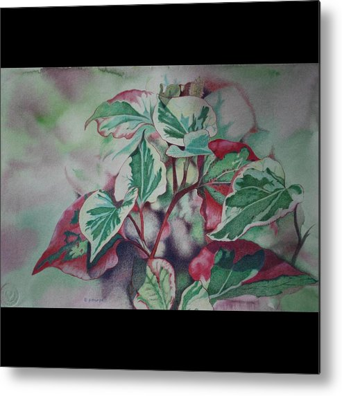 Close Focus Nature Scene Metal Print featuring the drawing Christmas In July by Patsy Sharpe