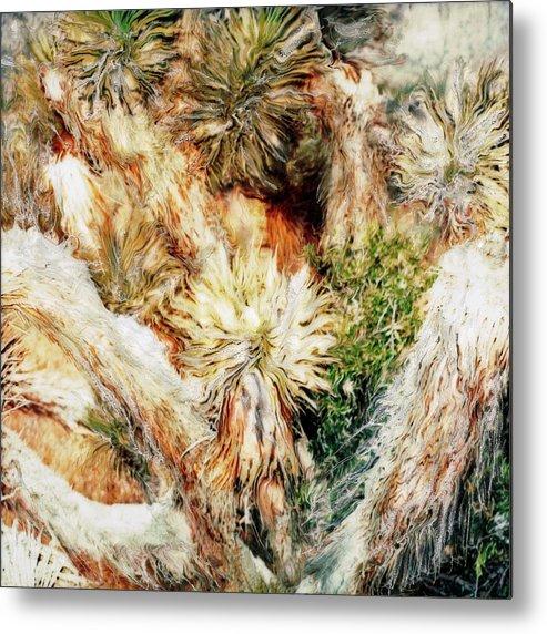 Paul Tokarski Metal Print featuring the photograph Yucca Cool Patch by Paul Tokarski