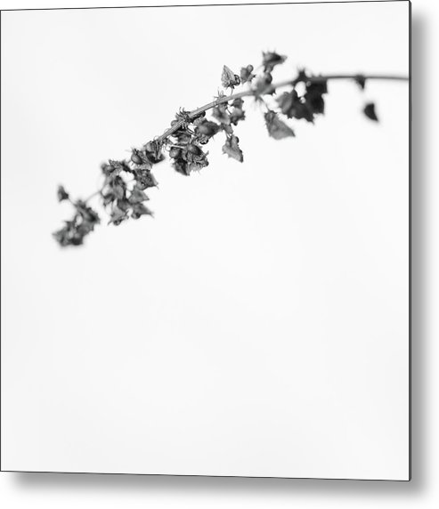Dry Metal Print featuring the photograph Untitled by Gabriela Insuratelu