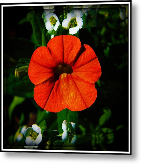 Flower Metal Print featuring the photograph Center Stage by Leslie Revels