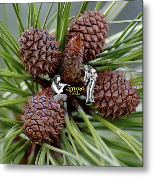 Jethro Tull Metal Print featuring the photograph Pinecone Rock 1 by Ben Upham