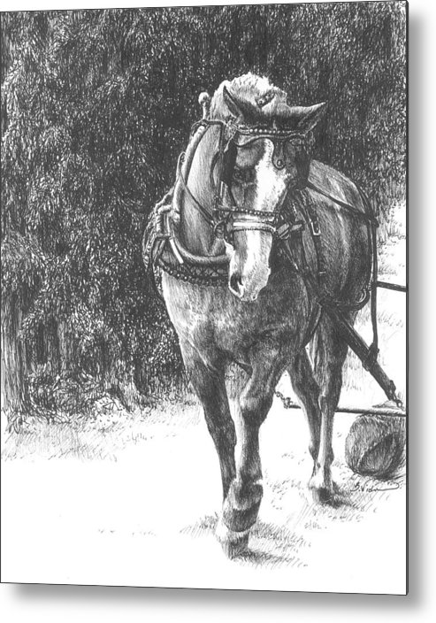 Horse Metal Print featuring the drawing Powerful Grace by Barbara Widmann