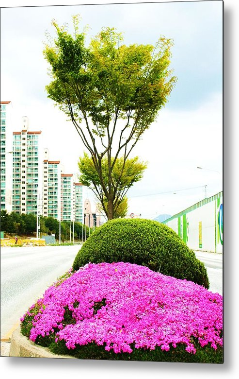 Trees Metal Print featuring the photograph Local Greenery 1 by Michael C Crane