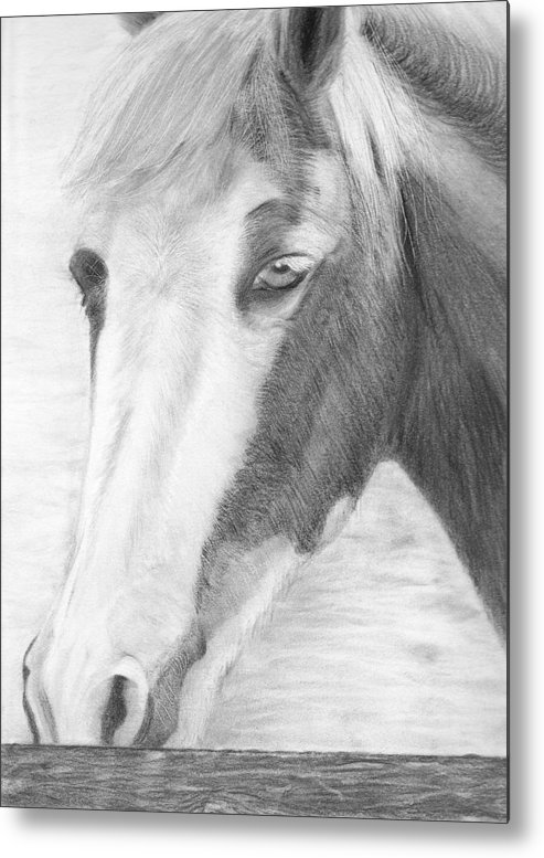 Horse Metal Print featuring the drawing Sabrina by Karen Stitt