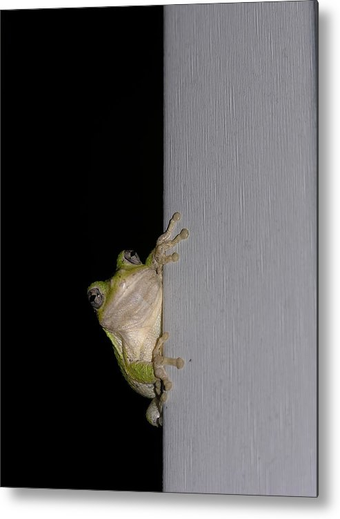 Nature Metal Print featuring the photograph Tree Frog by Anna Dubon