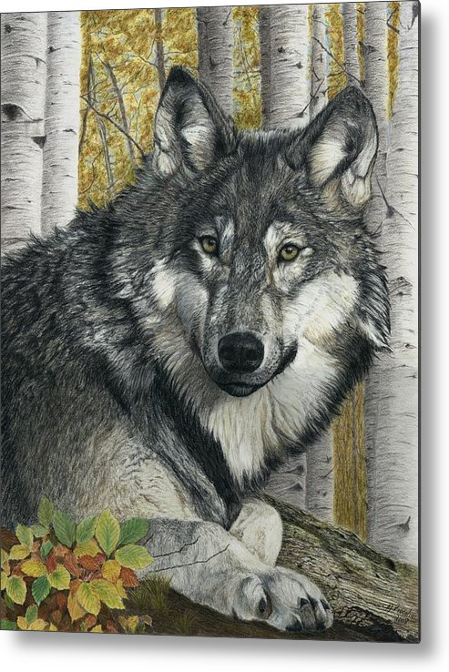 Wolf Metal Print featuring the painting Alpha Male by Marlene Piccolin
