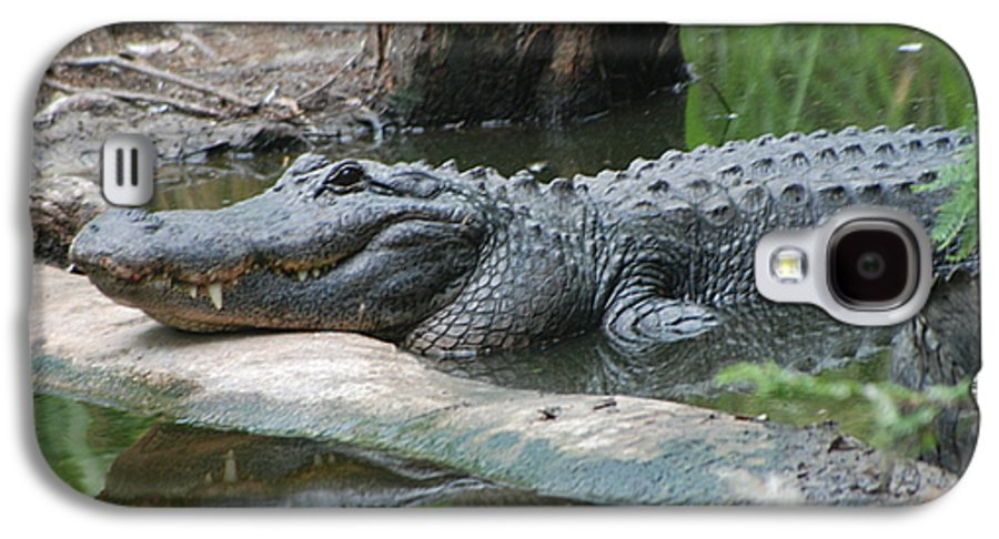 Florida Galaxy S4 Case featuring the photograph The Other Florida Gator by Margaret Fortunato