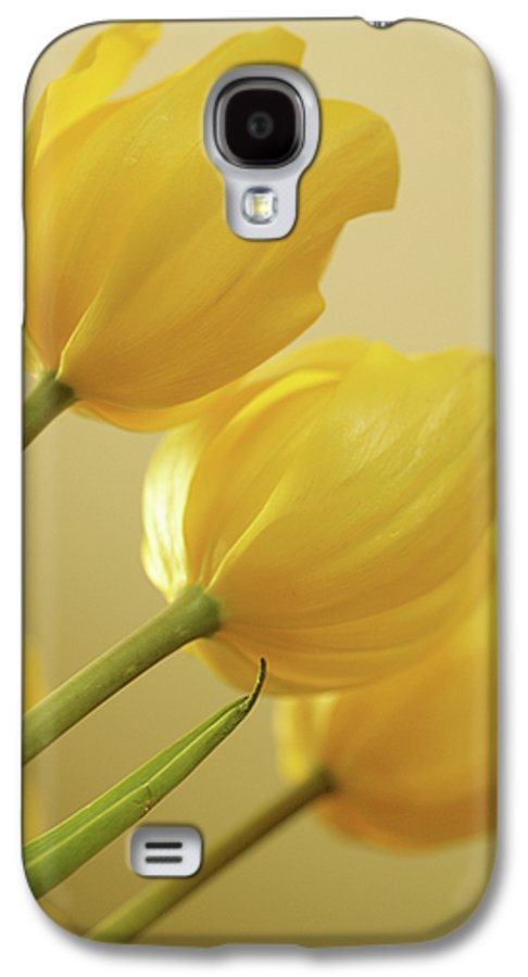 Tulips Galaxy S4 Case featuring the photograph Yellow Tulip Trio by Bonnie Bruno