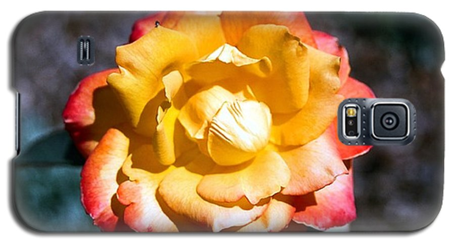 Rose Galaxy S5 Case featuring the photograph Red Tipped Yellow Rose by Dean Triolo