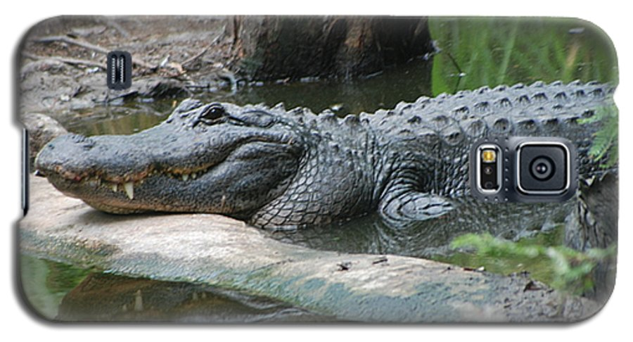 Florida Galaxy S5 Case featuring the photograph The Other Florida Gator by Margaret Fortunato