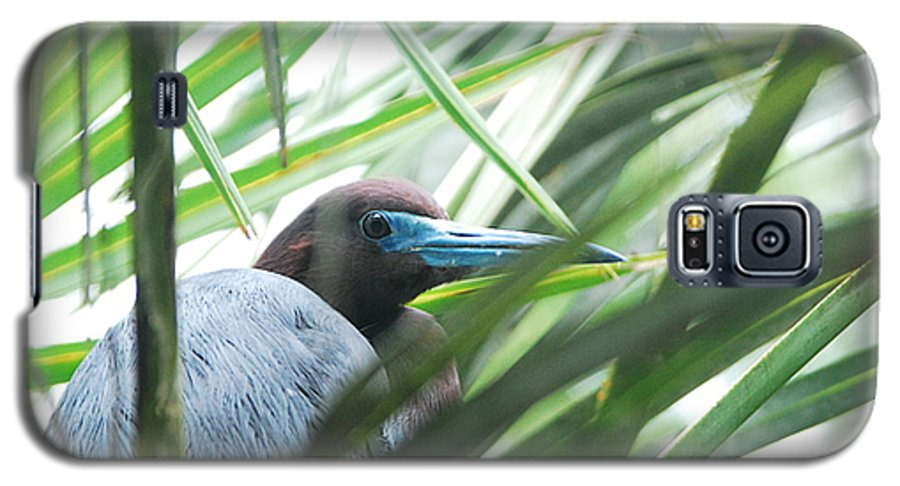 Wings Galaxy S5 Case featuring the photograph Under Her Watchful Eye by Margaret Fortunato