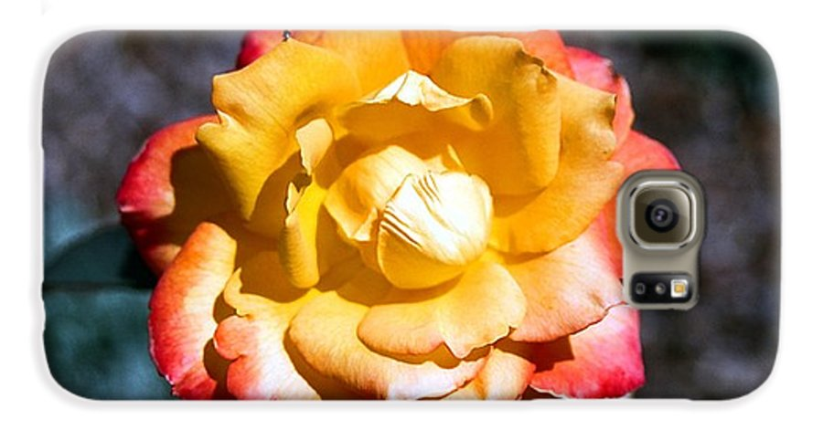 Rose Galaxy S6 Case featuring the photograph Red Tipped Yellow Rose by Dean Triolo