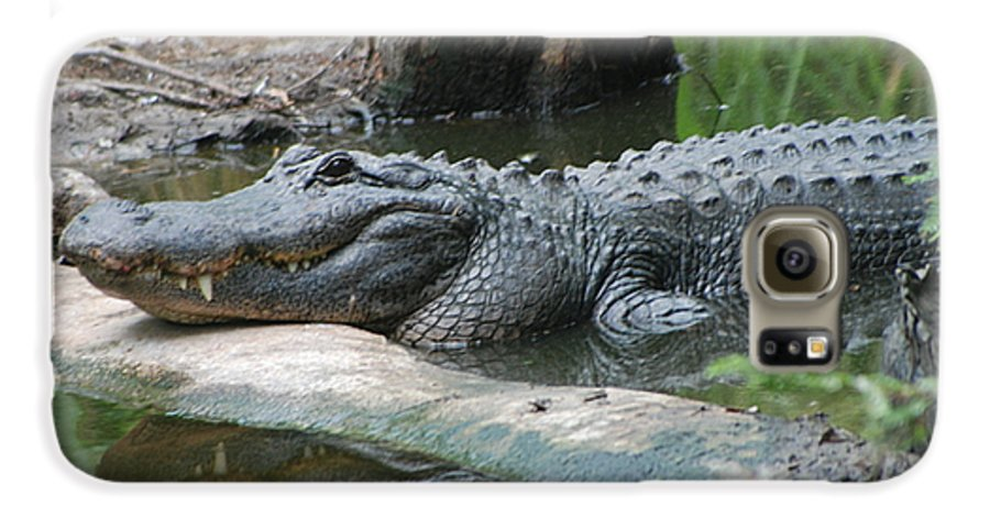 Florida Galaxy S6 Case featuring the photograph The Other Florida Gator by Margaret Fortunato