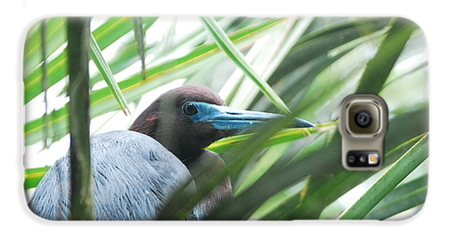 Wings Galaxy S6 Case featuring the photograph Under Her Watchful Eye by Margaret Fortunato