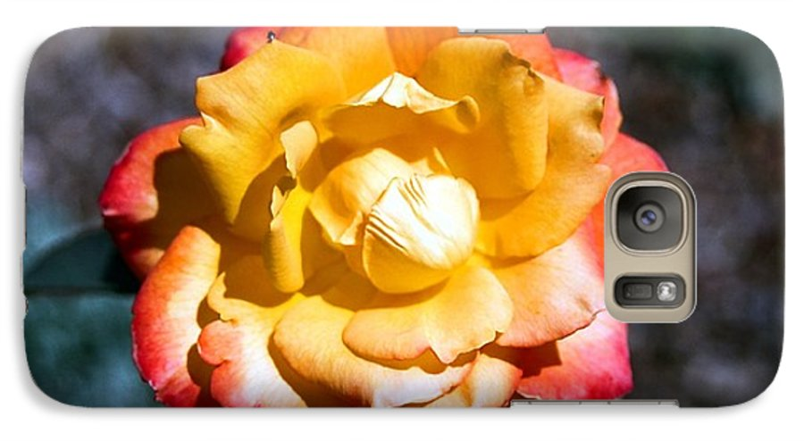 Rose Galaxy S7 Case featuring the photograph Red Tipped Yellow Rose by Dean Triolo