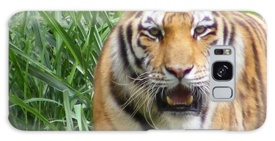 Tiger Galaxy Case featuring the photograph Tiger by Florentina De Carvalho