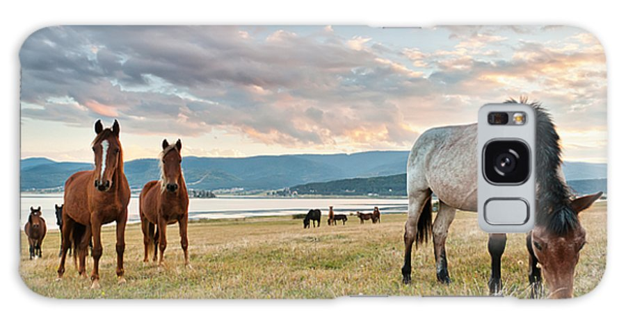 Dam Galaxy S8 Case featuring the photograph Curious Horses by Evgeni Dinev