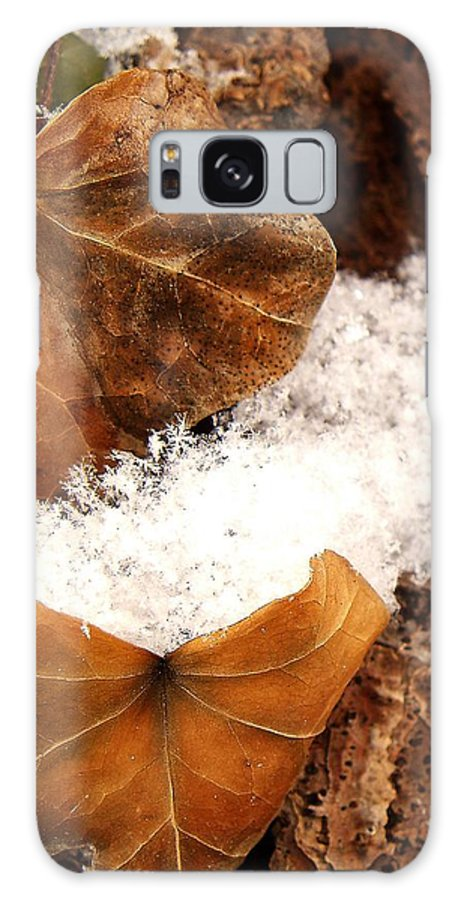 Fall Galaxy Case featuring the photograph Fall And Winter by Gaby Swanson