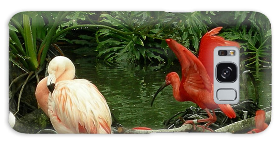 Birds Galaxy S8 Case featuring the photograph Flamingo And Scarlet Ibis by Carol Turner
