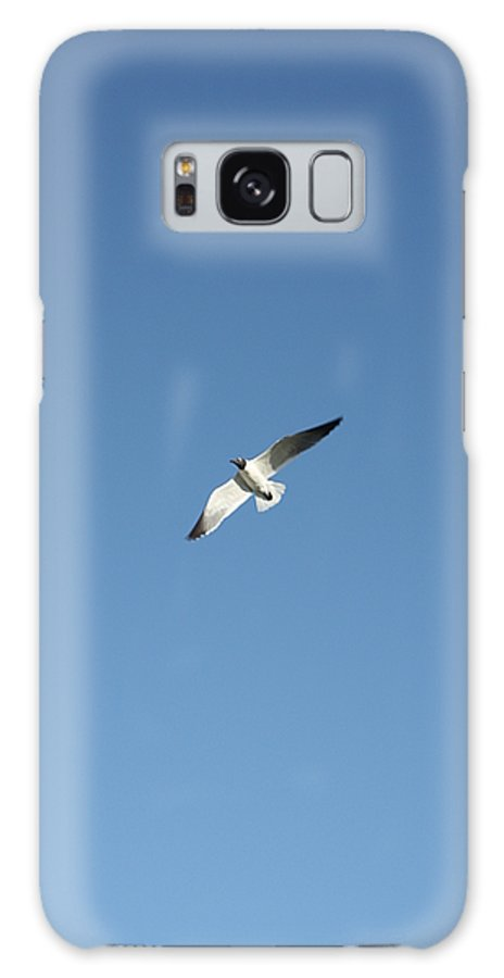 Seagull Galaxy S8 Case featuring the photograph Flying Around by Erin Rosenblum